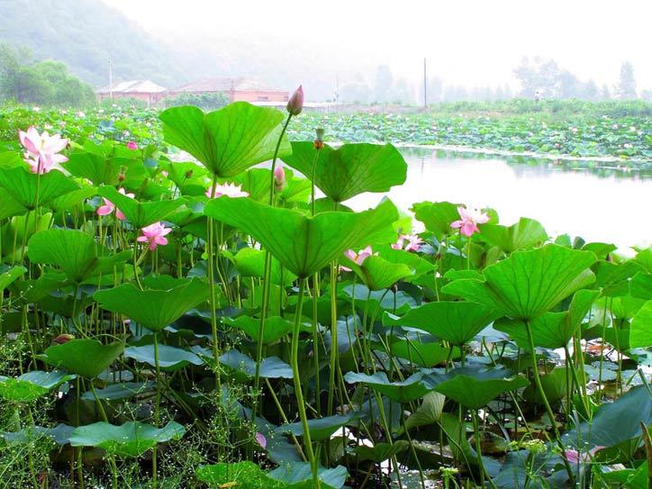清新水上绿叶风景图片